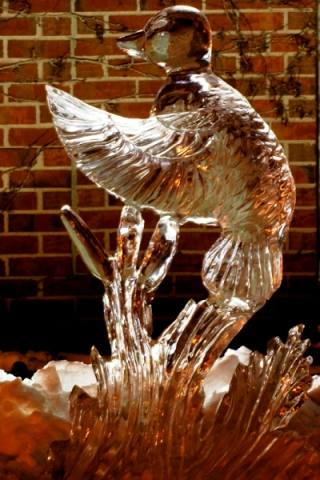 Duck Ice Sculpture, Duck in Flight Ice Sculpture, Ice Impressions, Northern Michigan Ice Sculptures, Traverse City.